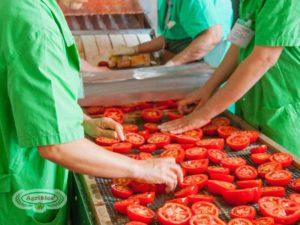 lavorazione dei pomodori biologici agriblea
