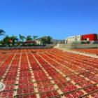 panoramica pomodori secchi
