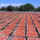 pomodori secchi e pomodorini secchi