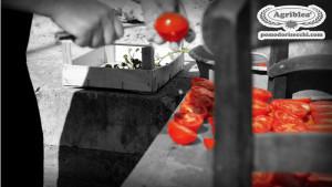 la-maestria-della-nonna-che-taglia-i-pomodori-per-metterli-ad-essiccare-al-sole
