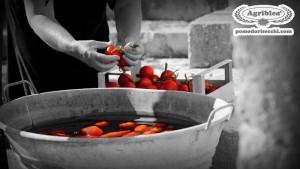 nonna-che-lava-i-pomodori-in-una-vasca-antica-di-zinco