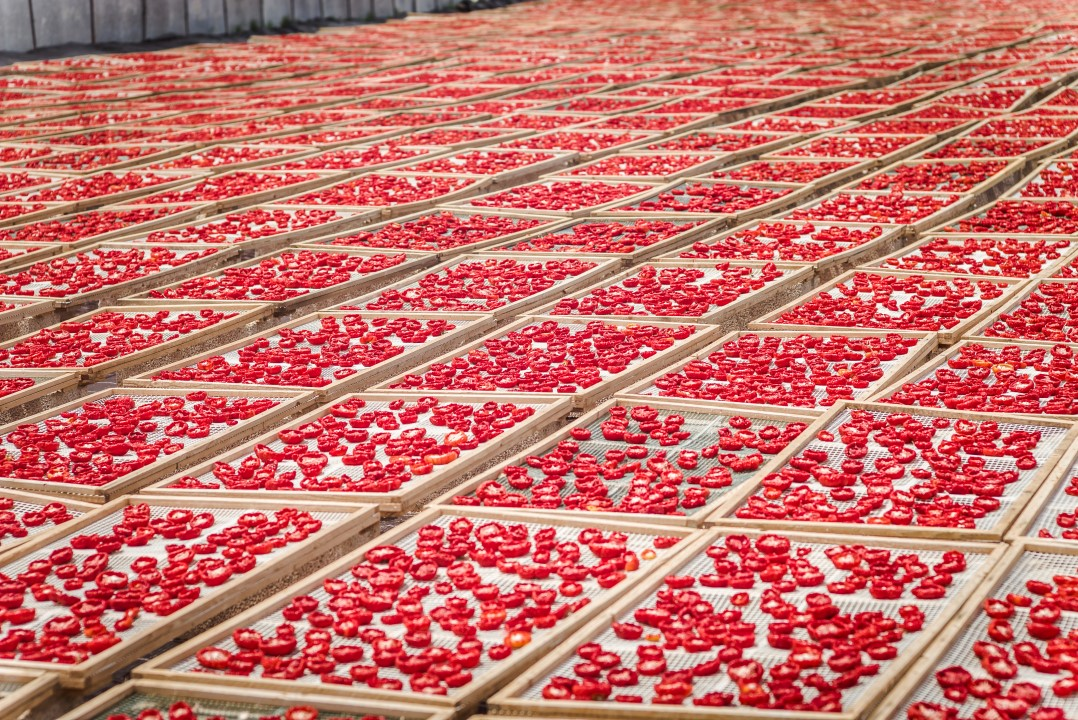 Red sea: production of sun dried organic tomatoes