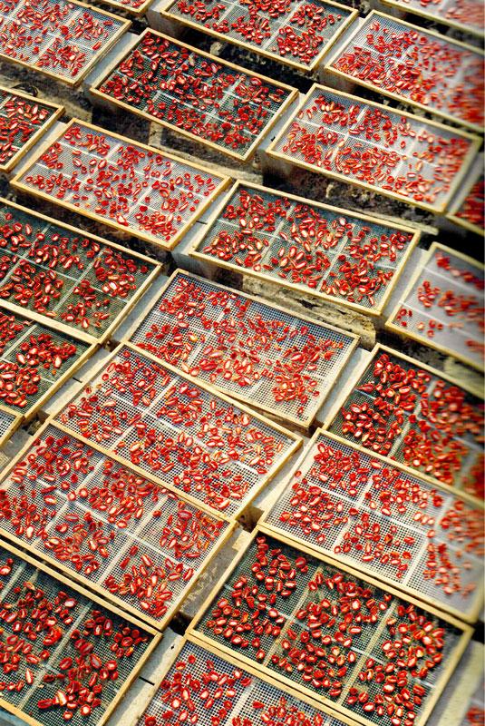 essiccazione pomodori bio Agriblea