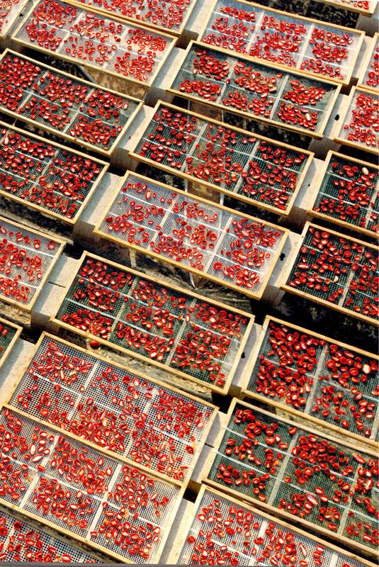 foto essiccazione pomodori bio Agriblea