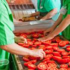 lavorazione dei pomodori biologici