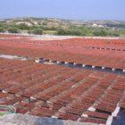 pomodori secchi al sole
