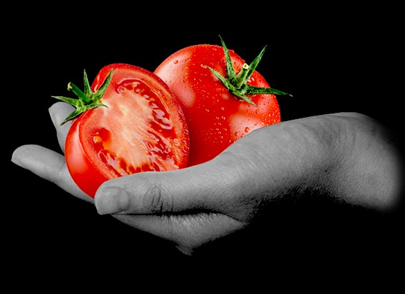 pomodoro bio agriblea